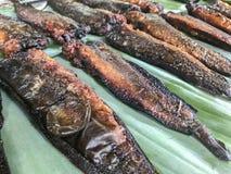 torkad rimmad sun för fisk Arkivfoto