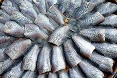 Torkad rimmad ung ogift kvinnafisk Fotografering för Bildbyråer