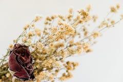 Torkad rosa tappningstil för blomma Royaltyfri Foto