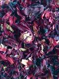 Torkad rosella royaltyfria foton