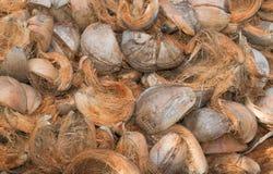 Torkad spathe av kokosnöten Arkivbild