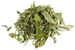 Torkad Stevia låter vara (den söta leafen, sockerleafen) Fotografering för Bildbyråer