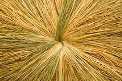 Torkad sugrör- eller höbakgrund Royaltyfri Fotografi