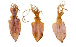 torkad tioarmad bläckfisk Arkivbilder