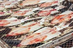 Torkad tioarmad bläckfisk Fotografering för Bildbyråer