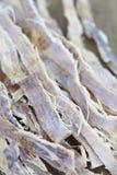 Torkad tioarmad bläckfisk Royaltyfria Foton