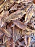 Torkad tioarmad bläckfisk Royaltyfri Fotografi
