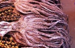 Torkad tioarmad bläckfisk Arkivfoto