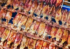 Torkad tioarmad bläckfisk för att bevara mat som säljer royaltyfria bilder