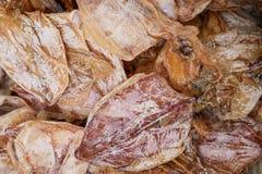 Torkad tioarmad bläckfisk på fiskmarknaden i Thailand, tioarmad bläckfiskbakgrund och textur Royaltyfri Fotografi