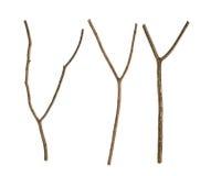 Torkad trädfilial Arkivbild