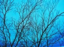Torkad trädfilial arkivfoton