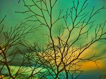 Torkad trädfilial och himmel Arkivfoton