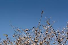 torkad tree Fotografering för Bildbyråer