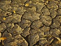 Torkad-ut jordskorpa med sprickor Arkivfoto