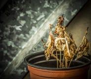 Torkad växt Royaltyfri Bild