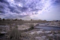 torkad våtmark Fotografering för Bildbyråer