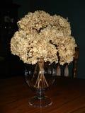 torkad vanlig hortensia Arkivfoton