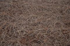 torkad vegetation Arkivfoton