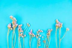 Torkad violett staticeblomma på ljust - blå bakgrund royaltyfria foton