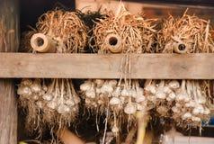 Torkad vitlök hängde i ladugården arkivfoto