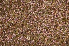 Torkad vulgaris ljungteCalluna, for bakgrunder eller textur royaltyfri foto