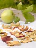Torkade äppleskivor Royaltyfri Fotografi