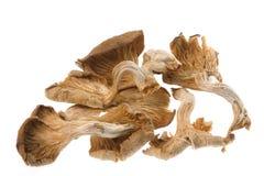 torkade ätliga champinjoner Arkivbilder