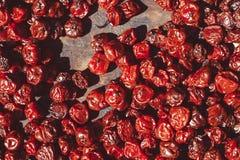 Torkade bär torkar i solen arkivbild