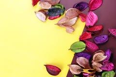 torkade blommor Fotografering för Bildbyråer