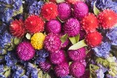 torkade blommor arkivfoton