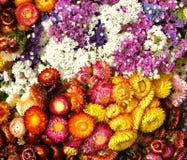 torkade blommor Arkivfoto
