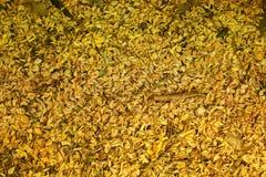 Torkade blommor faller på golvet, guld- blommor på jordning Royaltyfria Bilder