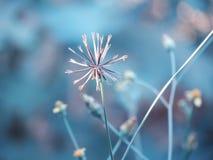 Torkade blommor i fältet, tappningstil Royaltyfria Bilder