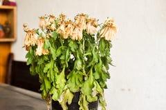 Torkade blommor i vasen royaltyfri fotografi