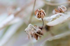 Torkade blommor med filiallavendel Fotografering för Bildbyråer