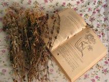 torkade blommor medicinal v?xter royaltyfri bild