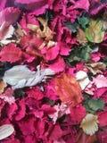 Torkade blommor och blad Arkivbild