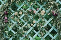 Torkade blommor på dekorativt galler i trädgården royaltyfri bild