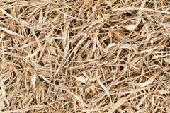 Torkade bruna grässidor på golvet texturerar bakgrund Royaltyfri Bild