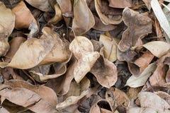 Torkade bruna sidor på golvet texturerar bakgrund Fotografering för Bildbyråer