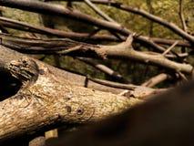Torkade brunaktiga växtstammar fotografering för bildbyråer