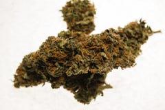 Torkade cannabismarijuanaknoppar Arkivfoton