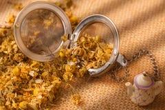 Torkade chamomileblommor royaltyfri bild