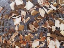 torkade champinjoner arkivfoton