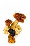 Torkade champinjoner Arkivbilder