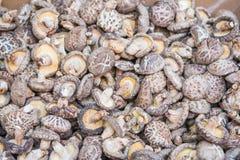 Torkade champinjoner för att laga mat ingredienser Arkivbild