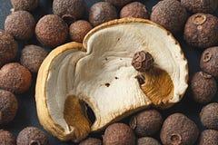 Torkade champinjoner med kryddor för att laga mat Fotograferad närbild Royaltyfria Foton