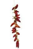 torkade chilies Arkivbilder