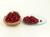 torkade cranberries Royaltyfri Foto